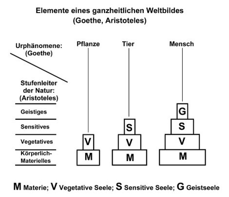 Materie-Seele (2)