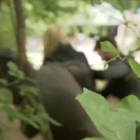 Mülheim: Fünf Bulgaren (12-14) vergewaltigen geistig leicht behinderte junge Frau