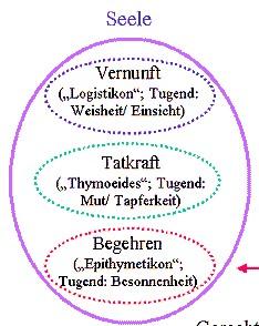 Platons Seelenmodell (2)