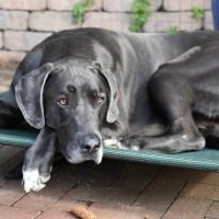 Brandenburg: Hunde von AfD-Politiker (Kalbitz-Gegner) vergiftet